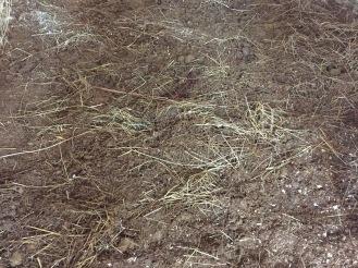 Hidden horse manure