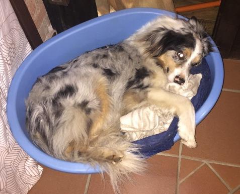 Skipper the sweetest dog