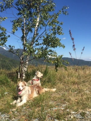 Dogs in the nature