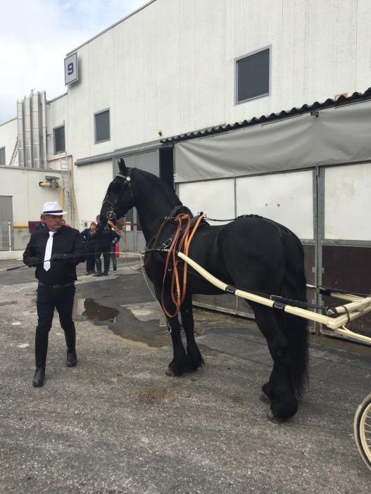 Friesian horse pulling a cart