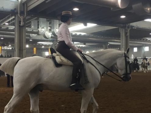 PRE horse
