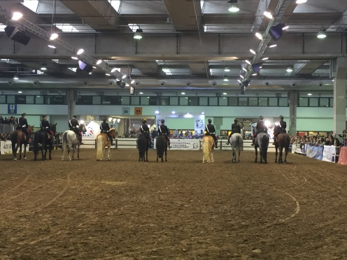Italian horse breeds