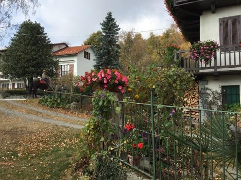 Flowers in October