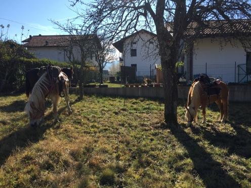 Horses waiting outside