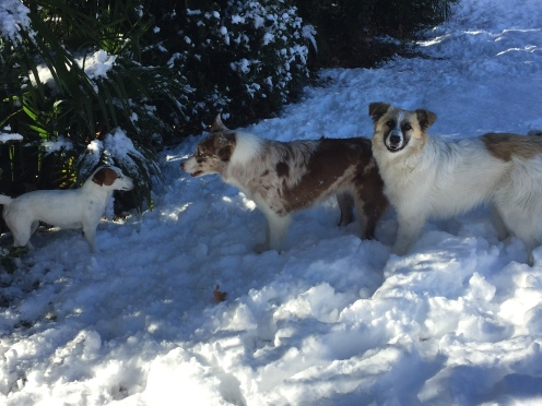 My dogs playing in the snow