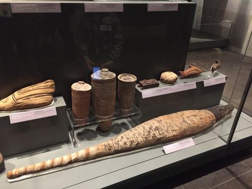 A mummified crocodile