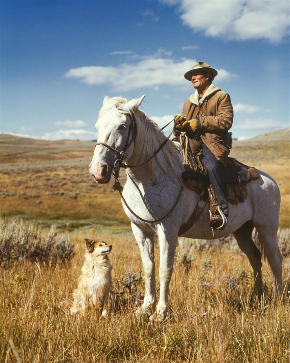 adventure-animals-cowboy-162520