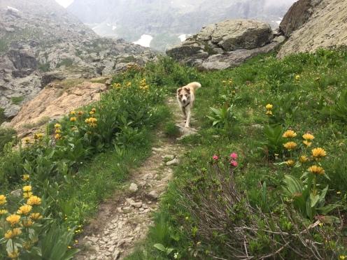 Dakota running