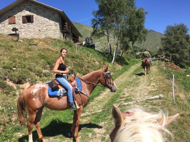 Appaloosa, Haflinger and Quarter horse