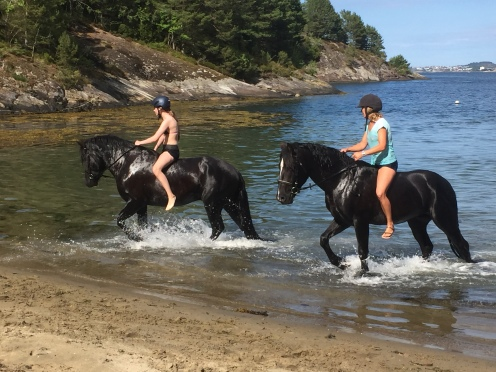 Stallions in the sea