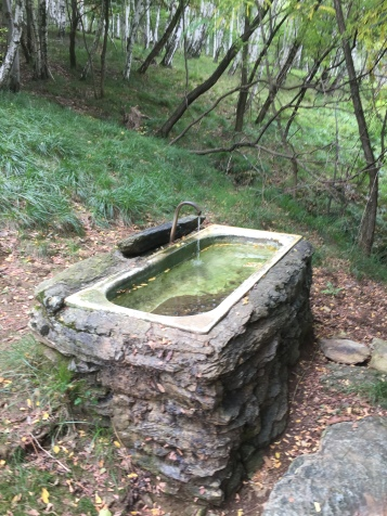 A drinking spot