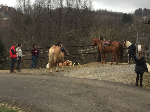 Horses parked nearby
